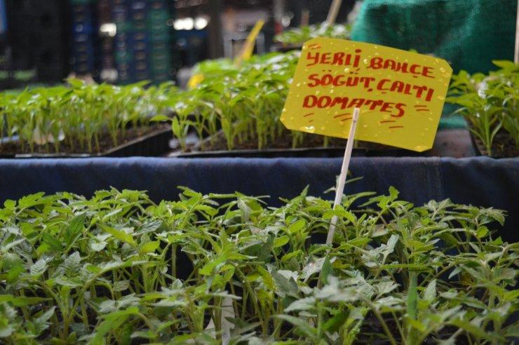 Yılın ilk sebze fideleri pazar tezgâhlarını yeşillendirdi