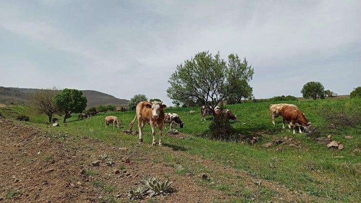 Baharın gelişiyle meralar hayvanlarla süslendi