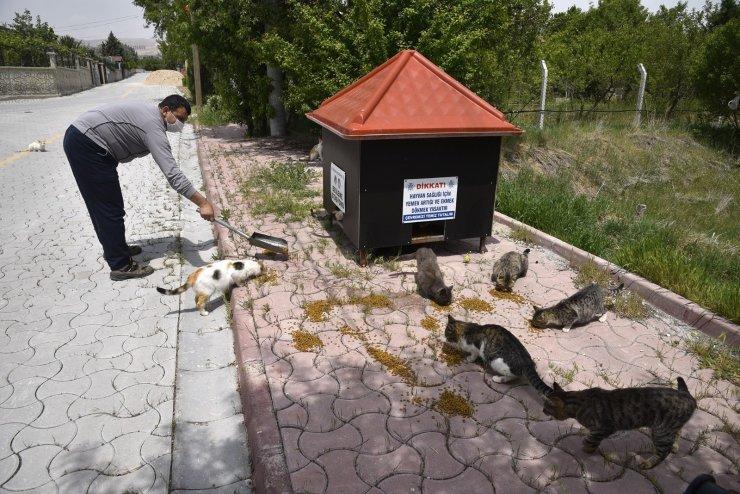 Selçuklu Belediyesi tam kapanmada da sokak hayvanlarını unutmadı