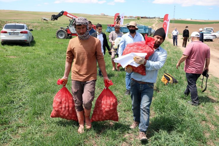 Yozgat'ta 7 çeşit yerli patates tohumu deneme ekimi yapıldı