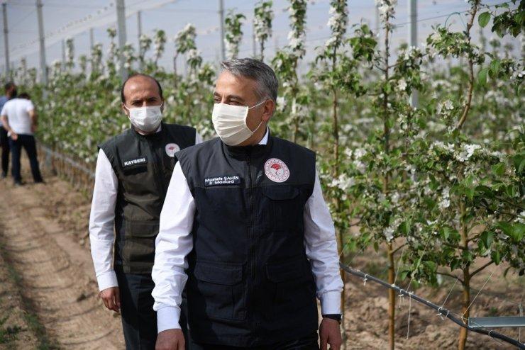 Kayseri elma yetiştiriciliğinde 5. sırada