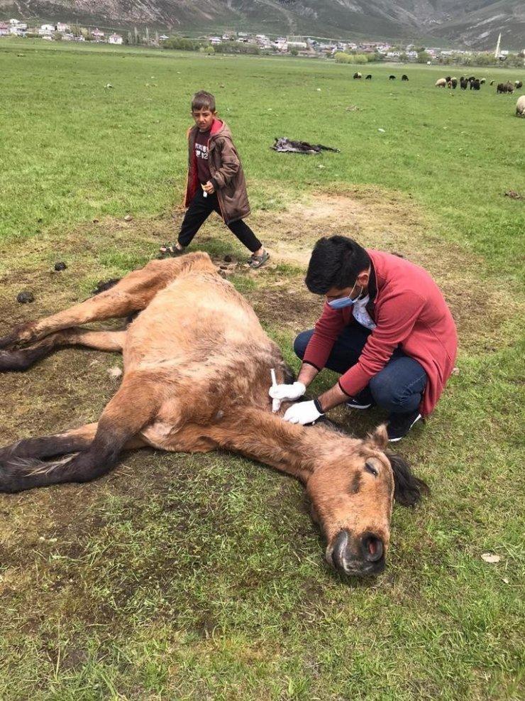 Ayağı kırılan atın yardımına Tarım ve Orman Bakanlığı görevlileri yetişti