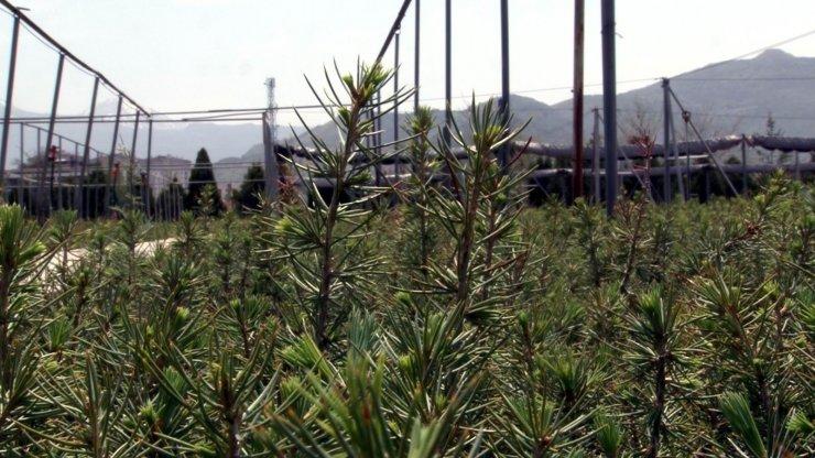 Yılda 1.5 milyon fidan üretip doğayı yeşillendiriyorlar