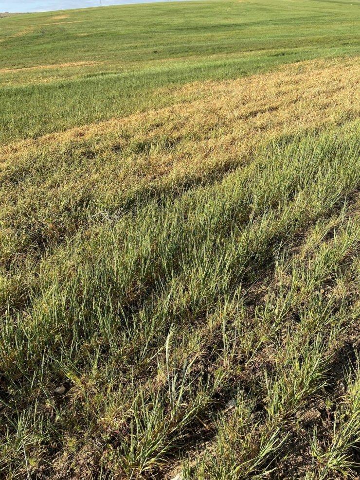 Çiftçileri kuraklık korkusu tedirgin ediyor
