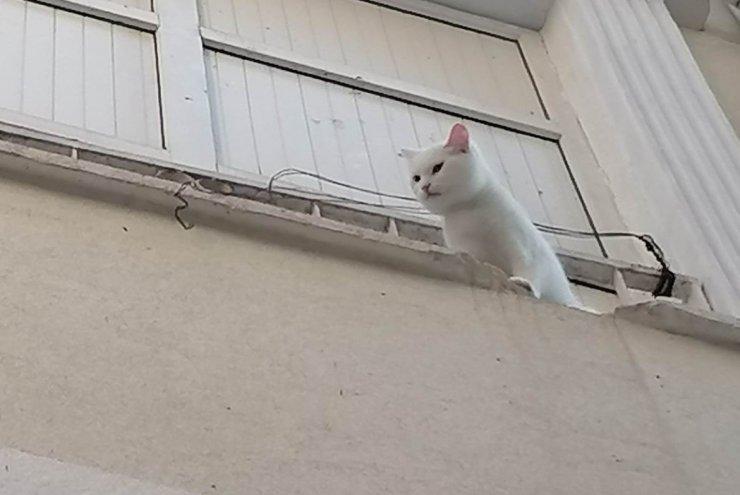 Balkon demirlerine sıkışan kediyi itfaiye ekipleri kurtardı