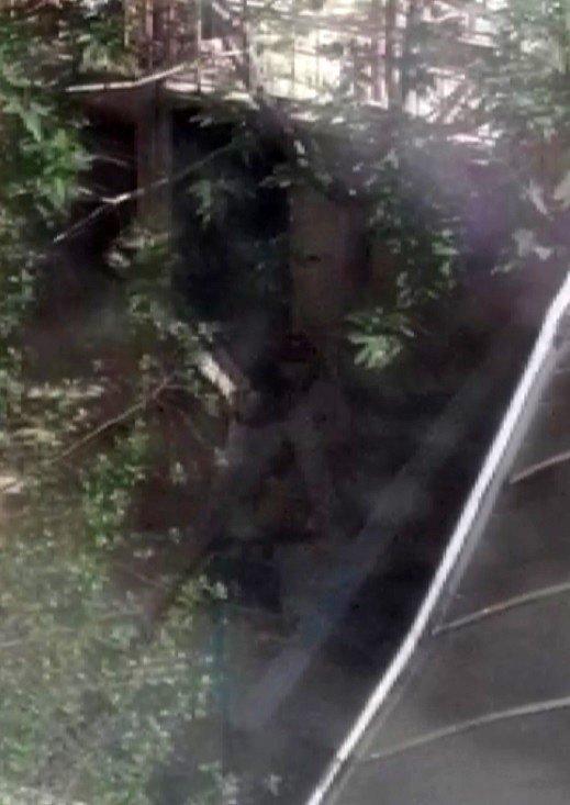 Köpeklere eziyet eden kadın cep telefonu kamerasıyla görüntülendi