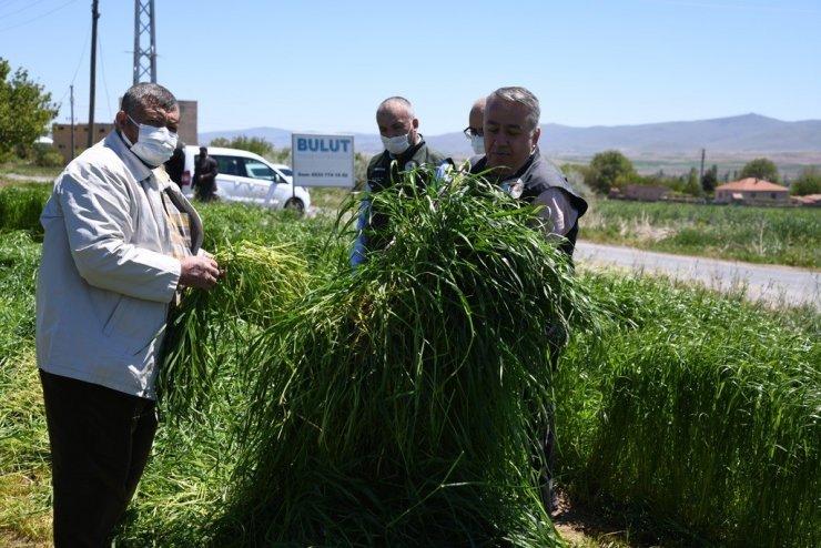Yem bitkisini üretimine yönelik eğitim ve saha çalışmaları meyvesini veriyor