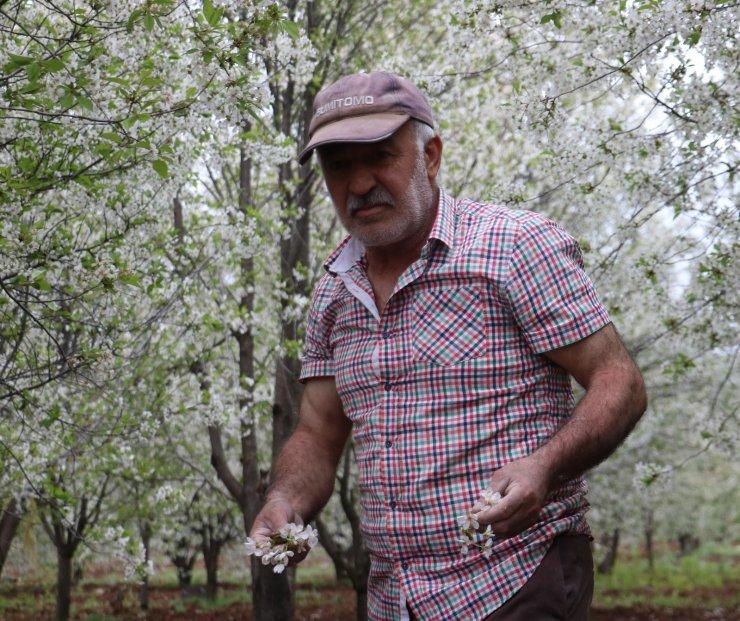 Fırtına meyve bahçelerini vurdu, yüzde 25 ürün kaybından endişe ediliyor