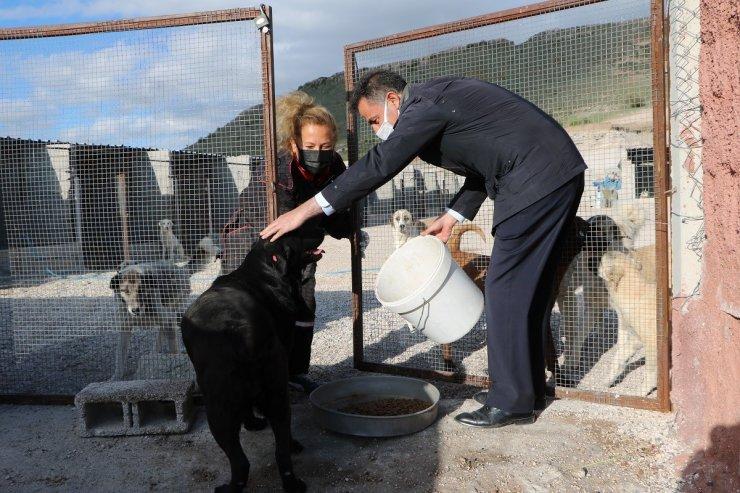 Uçhisar Belediye Başkanı Süslü, sokak hayvanlarını unutmadı