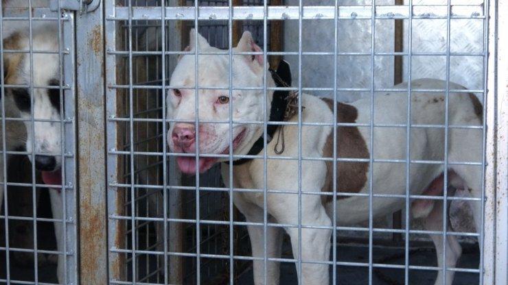 Sokağa çıkabilmek için yanlış köpeği seçti, 10 bin lira cezadan kaçamadı