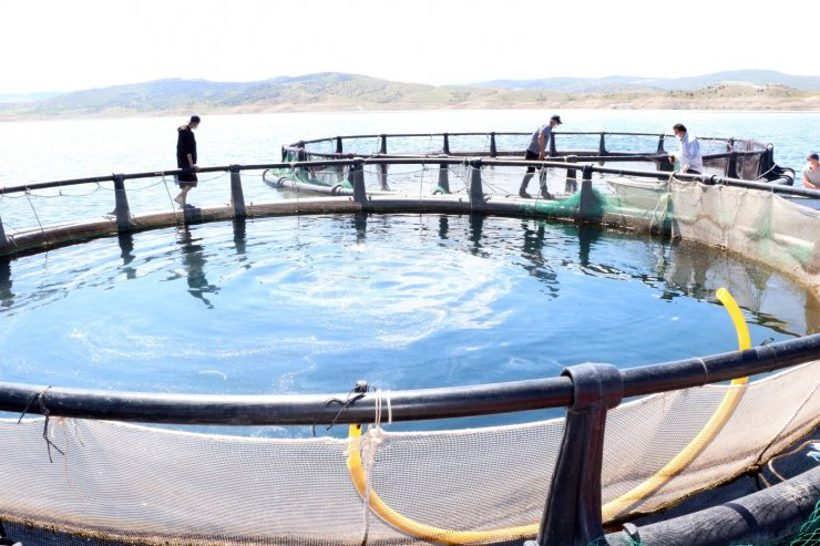 Başaramazsın dediler, o denizi olmayan Bozkırda yılda 60 ton balık üretti