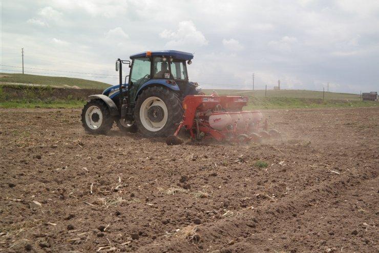 Çiftçiler silajlık mısır ekimine başladı