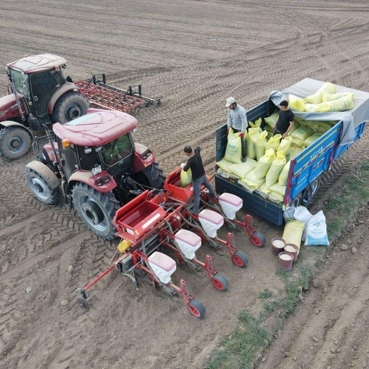 Tomarza ilçesinde kabak çekirdeği ekimi başladı