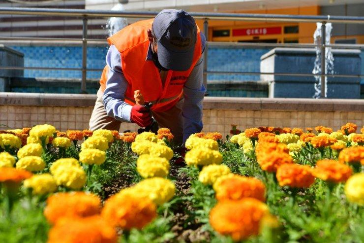 Mamak Belediyesi mevsimlik çiçek dikim çalışmalarına devam ediyor