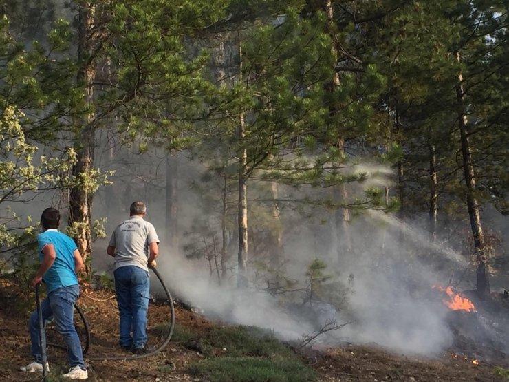 Seyitgazi'deki orman yangınında 2 dönüm alan zarar gördü