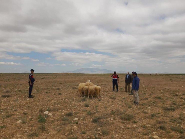 Jandarma kayıp koyunları drone ile buldu