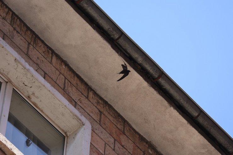İpe takılan ebabil kuşu kurtarıldı