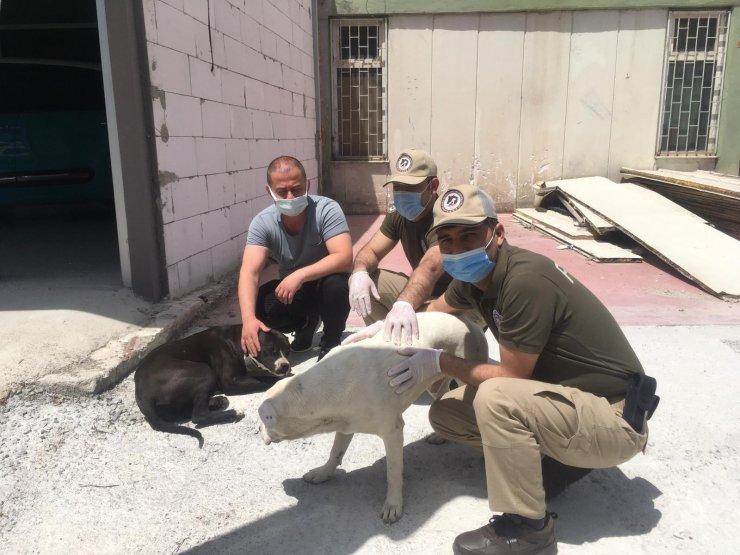 Köpek çaldığı iddia edilen 3 kişi gözaltına alındı