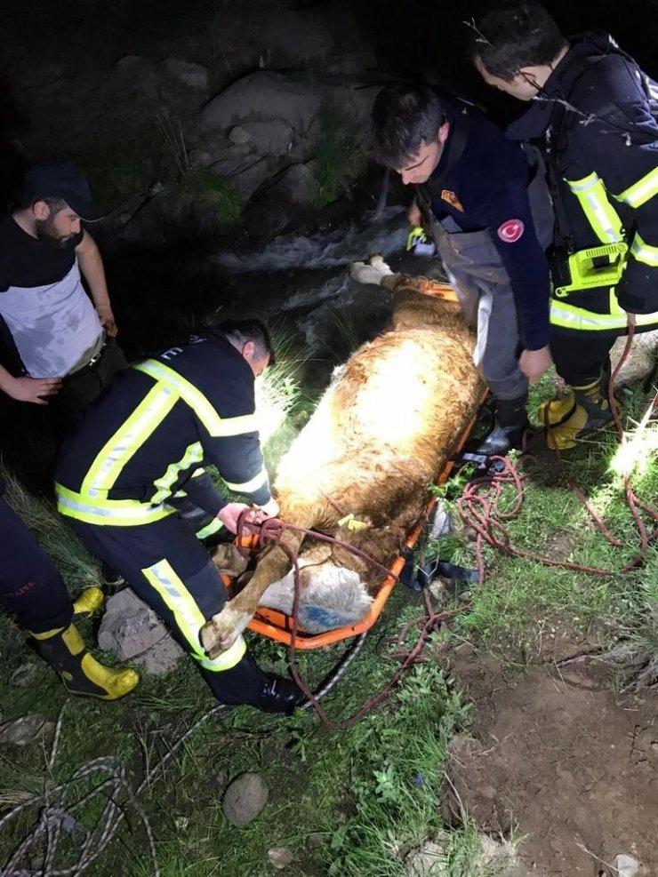 Dereye düşen büyükbaş hayvan 8 saatlik operasyonla kurtarıldı