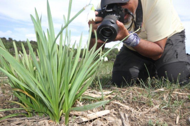 """Şifa kaynağı """"göl soğanı"""" doğa ve fotoğrafseverlerin ilgisini çekiyor"""