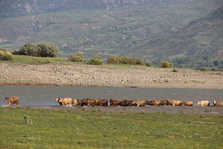 Alarm veren barajda Afrika'yı aratmayan görüntüler