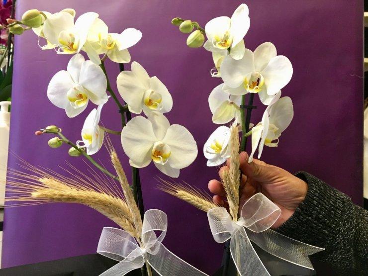 Orkidenin fiyatı dudak uçuklatıyor