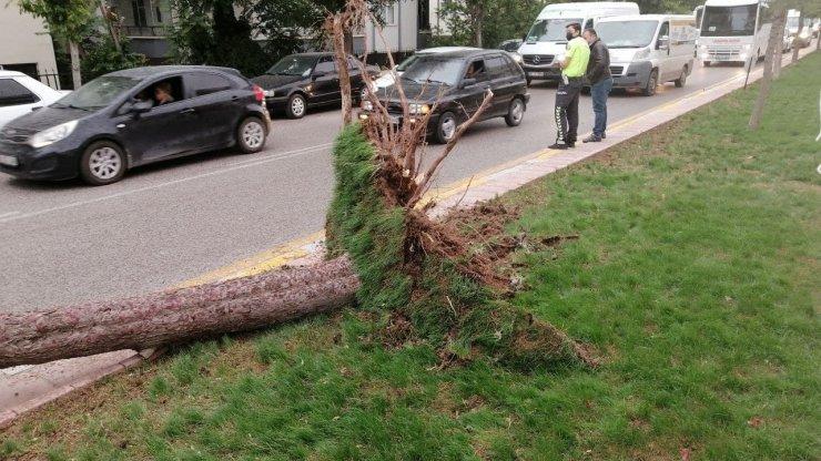 Aksaray'da şiddetli rüzgar ağacı kökünden söktü