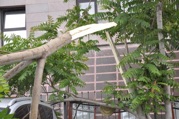 Park halindeki otomobil devrilen ağaçtan kıl payı kurtuldu