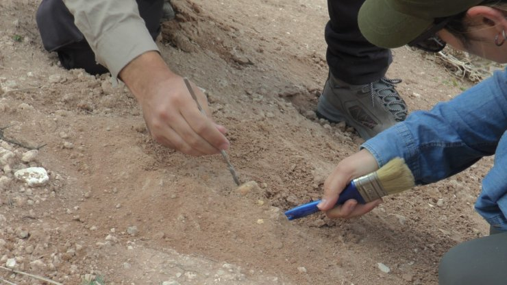 7.5 milyon yıllık geçmiş için kazı çalışmaları devam ediyor