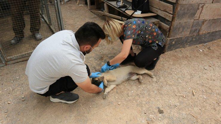 Odunpazarı Belediyesi hayvanseverlerle iş birliğini sürdürüyor