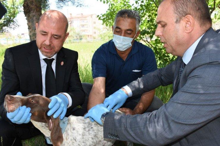 Aksaray'da hayvanlar mikroçip ile takip edilecek