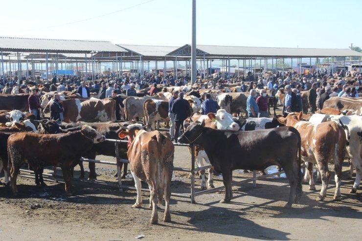 İç Anadolu'nun en büyük hayvan pazarında kurban Bayramı yoğunluğu