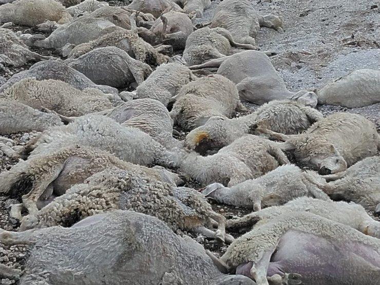 Toprak kaydı, 58 koyun telef oldu