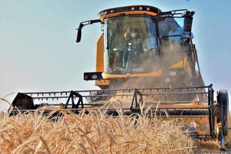 Aksaray 1 milyon 300 bin ton arpa üretimiyle Türkiye'de 7. sırada