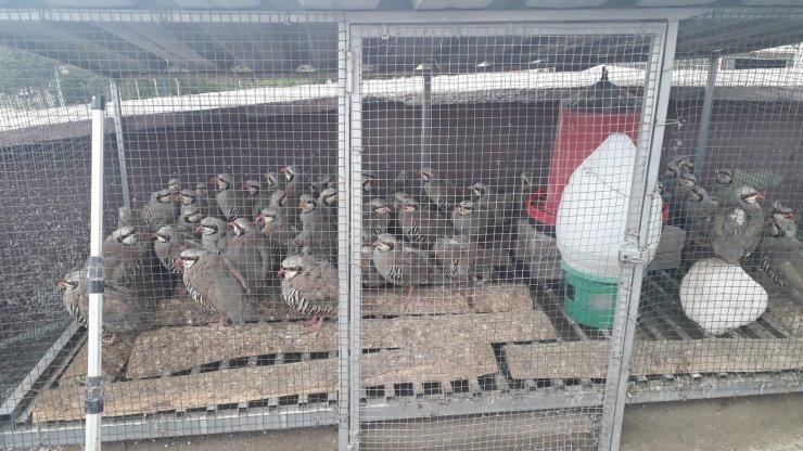 Konya'da izinsiz keklik bulunduran şahsa 61 bin lira ceza