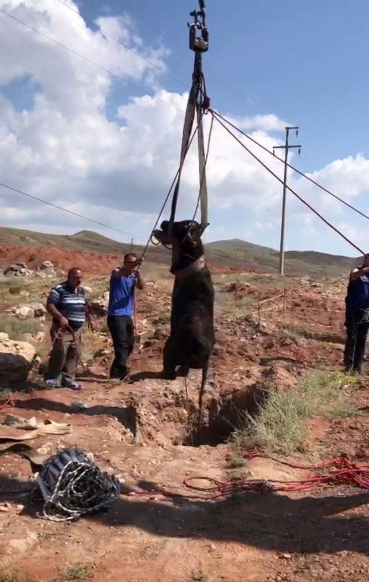 Kuyuya düşen manda AFAD tarafından kurtarıldı