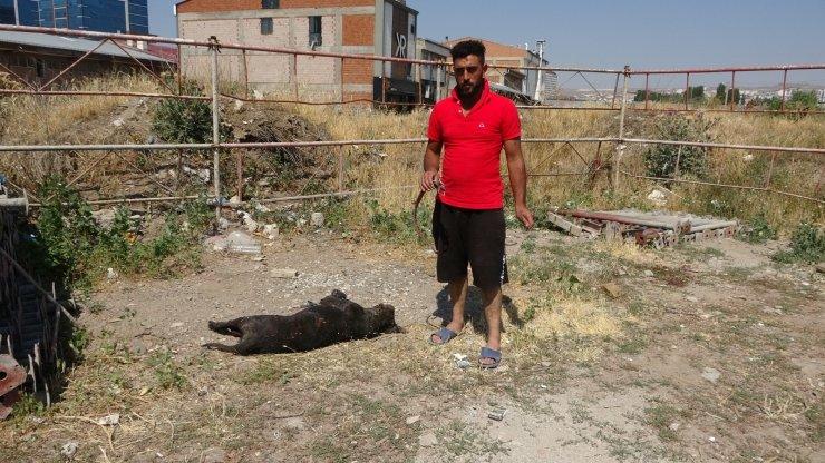 Kiraz tüfekle vurularak öldürüldü