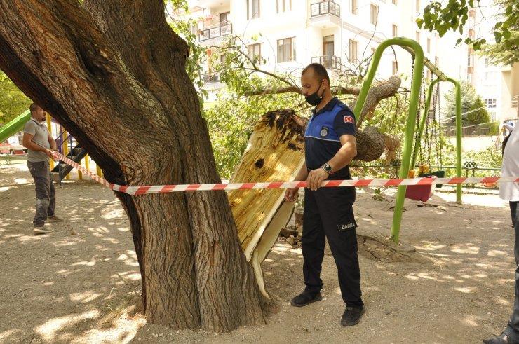 Çocuk parkında ağaç devrildi, şans eseri can kaybı ya da yaralanan olmadı