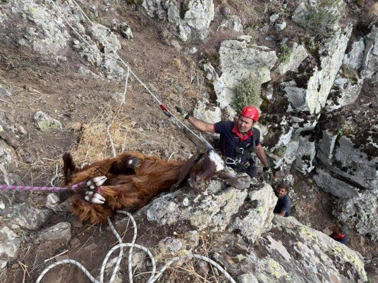 Dağlık alanda 10 gündür mahsur kalan keçiler kurtarıldı